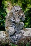 Steinzusammensetzung im Affe-Wald Lizenzfreie Stockbilder