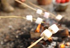 Steka marshmallowen på brasa utomhus royaltyfri foto