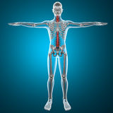 Stekel x-ray skelet stock illustratie