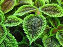 Stekelige Bladeren Royalty-vrije Stock Afbeelding
