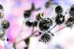 Stekelige bloem in de herfst Royalty-vrije Stock Afbeelding