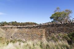 Stekelige Brug in Tasmanige stock fotografie