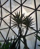 Stekelige cactussen in geodetische koepel in Ram IX van Suan Luang Phra Park Stock Afbeelding