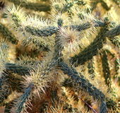 Stekelige Doornige groene cactus die als een mens in een cactuskostuum kijkt stock afbeeldingen