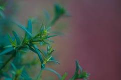 Stekelige groene bladeren Royalty-vrije Stock Afbeelding