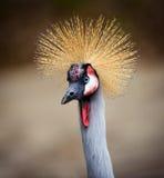 Stekelige Haired Vogel Royalty-vrije Stock Afbeelding