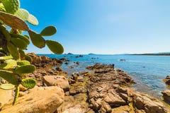 Stekelige peren door het overzees in Santa Maria Navarrese Stock Fotografie