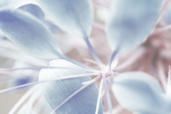 Stekelige spinbloem royalty-vrije stock afbeeldingen