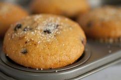 stekhet muffinpanna Arkivfoto