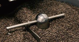 Stekhett virvla för kaffebönor som är blandat på att kyla enhetsplattformen i ett manufactoryseminarium arkivfilmer