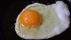 Stekt ägg och ost i en panna, stock video