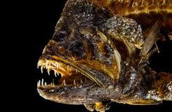 stekt fisk Arkivbild
