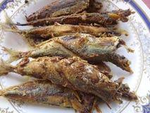 stekt mackerel Arkivbilder