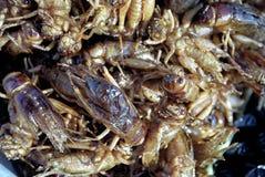 stekte gräshoppor Arkivfoto