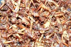 stekte gräshoppor Royaltyfria Bilder