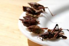 stekte gräshoppor Royaltyfria Foton
