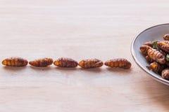 Stekte kryp - trä avmaskar frasigt gå för kryp in i maträtten på Arkivfoto