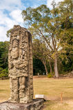 Stela in Copan Royalty Free Stock Photos