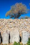 Stelae και δέντρα στοκ εικόνες