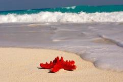 stella di mare Fotografia Stock