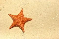 Stella di mare attenuata sulla spiaggia Fotografie Stock