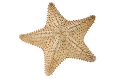 Stella di mare Isolato su bianco Fotografia Stock