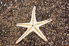 Stella di mare nella sabbia Fotografia Stock Libera da Diritti