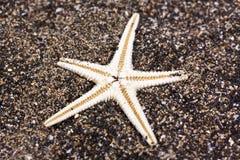 Stella di mare nella sabbia Immagine Stock Libera da Diritti