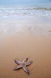 Stella di mare sulla spiaggia Fotografie Stock Libere da Diritti
