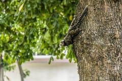 Stella di Mico in un albero fotografia stock