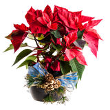 Stella di Natale di Ornated Immagine Stock