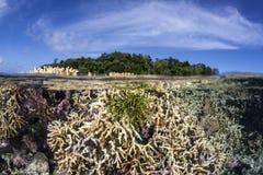 Stella di piuma sulla scogliera tropicale bassa Fotografia Stock Libera da Diritti