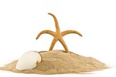 Stella e seashell marini sulla sabbia Immagini Stock Libere da Diritti
