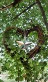 Stella scintillante in metà di del cuore della pianta di dave Immagini Stock Libere da Diritti