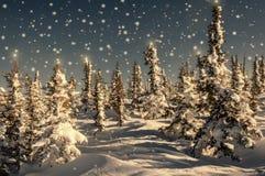 Stelle attillate dei fiocchi di neve della neve della foresta Immagine Stock Libera da Diritti