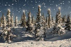 Stelle attillate dei fiocchi di neve della neve della foresta Fotografie Stock Libere da Diritti