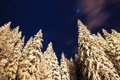 Stelle della neve Fotografie Stock