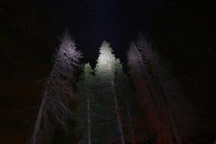 Stelle e cielo notturno con gli alberi sempreverdi accesi Fotografia Stock