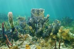 Stelle fragili di ramificazione della spugna del vaso di vita marina immagini stock libere da diritti