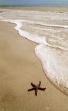 Stelle marine Fotografia Stock