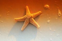 Stelle marine fotografia stock libera da diritti
