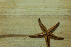 Stelle marine di ceramica fotografia stock immagine di colore