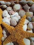 Stelle marine Immagini Stock