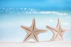 Stelle marine bianche con l'oceano, la spiaggia, il cielo e la vista sul mare Fotografie Stock Libere da Diritti