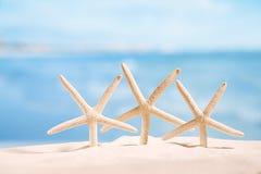 Stelle marine bianche con l'oceano, sulla spiaggia di sabbia, sul cielo e sulla vista sul mare bianchi Fotografia Stock