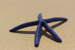 Stelle marine blu il giorno soleggiato della sabbia bianca Immagini Stock Libere da Diritti