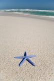 Stelle marine blu su una spiaggia immagini stock libere da diritti