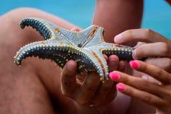 Stelle marine blu a Zanzibar Fotografia Stock Libera da Diritti