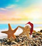 Stelle marine in cappello di Santa alla spiaggia Immagine Stock