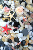 Stelle marine, conchiglia e pietre variopinte del ciottolo Fotografia Stock Libera da Diritti